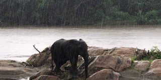 Photo: Elephant in the river