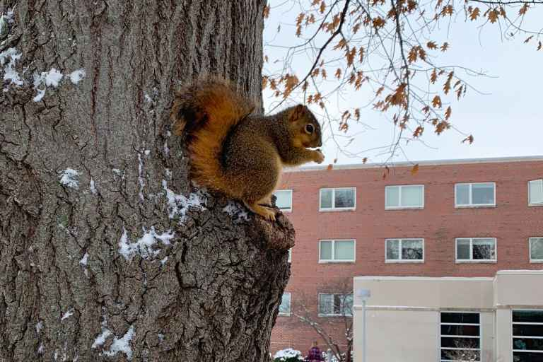 The diversity of trees on campus provides a great food source for a healthy squirrel population.